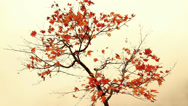 Lonely tree in the misty autumn forest. Stock Footage