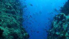 swim between a gap in two pinnacles - stock footage