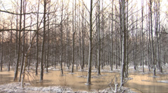Trees in frozen water Stock Footage