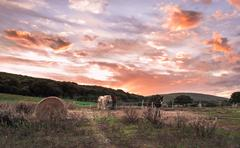 landscape of a sunset on a farm in sardinia - stock photo