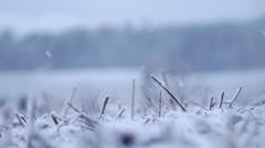 Winter field snowing Stock Footage