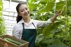 Young woman harvesting vegetables Stock Photos