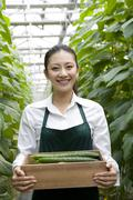 Young woman harvesting vegetables - stock photo