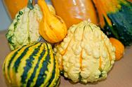 Stock Photo of vegetables pumpkin