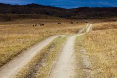 Stock Photo of Dry grass field with dirt road and mountains in the distance