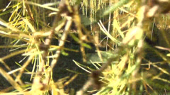 Walking imitation pov between colorful autumn larch tree twigs Stock Footage