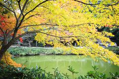 Autumn Japanese garden with maple - stock photo