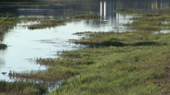 Birds in Louisiana Swamp Stock Footage