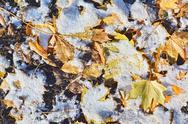 Stock Photo of snow and leaves