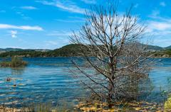 summer landscape of a lake of sardinia , with a tree - stock photo