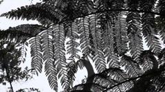 Jungle Ferns in Borneo Stock Footage