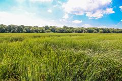 Field of grass during summer day Stock Photos