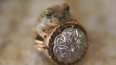 Frog Prince Ring Fairytale Fantasy - stock footage
