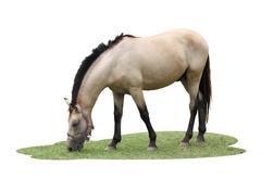 single horse eat some grasses on white background. - stock photo