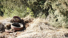 Old tires in the woods Stock Footage