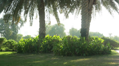 grass and trees in the park - stock footage
