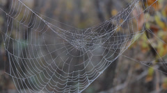 wet spider web on tree - stock footage