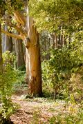 Sunbeams in Forest - stock photo