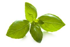 Basil leaves on white Stock Photos