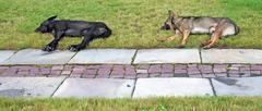 doggies - stock photo