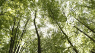 Stock Video Footage of Trees in a forest