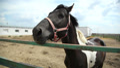 horses on the farm 2 HD Footage