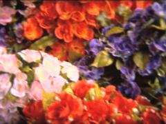 SUPER 8 psyche artificial flowers Stock Footage
