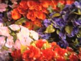 Stock Video Footage of SUPER 8 psyche artificial flowers