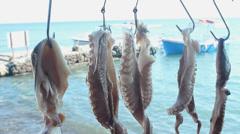 Common octopus in Greece - Octopus vulgaris Stock Footage