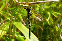 dragonfly resting on bamboo - stock photo