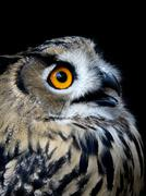 beautiful owl (taked at 1600 iso) - stock photo