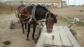 horses on the farm 1 Footage