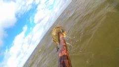 Spear Fishing a Mud Crab Stock Footage