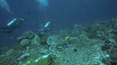Scuba divers exploring coral reef Stock Footage