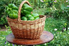 Basket with green paprika Stock Photos