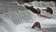 Footage of Grizzly Bear Catching Salmon at Brooks Falls, Alaska Stock Footage