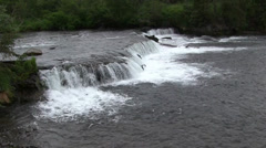 View of Brooks Falls with School of Salmon Jumping Up Stock Footage