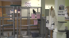 Cats awaiting adoption Stock Footage