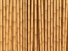 Bamboo Piirros