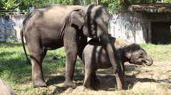 Adult elephant with small elephant at the zoo Stock Footage
