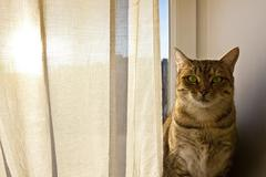 Cat staring into the camera and sits on the window board - stock photo