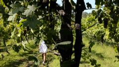 a walk through the vineyards - stock footage