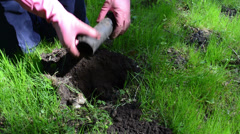Gardener man set pipe shape mole trap under ground Stock Footage