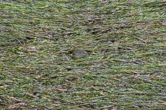 River with algae Stock Photos
