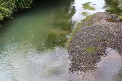 river with algae - stock photo