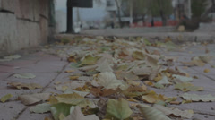 Autumn leaves blown away by the wind Stock Footage
