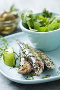 grilled sardines - stock photo