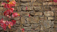 Virginia Creeper 007 Stock Footage