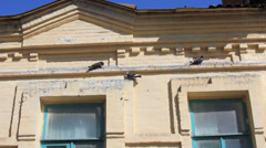 Pigeons seat on the house pilon Stock Footage