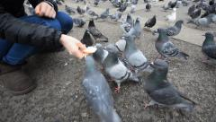 Girl hand with feeding pigeon on london marble arch Stock Footage